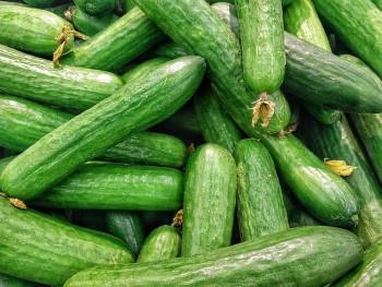 Saláta uborka fajták